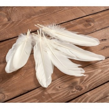 Διακοσμητικά φτερά ivory